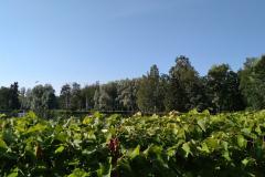 gatchina-park