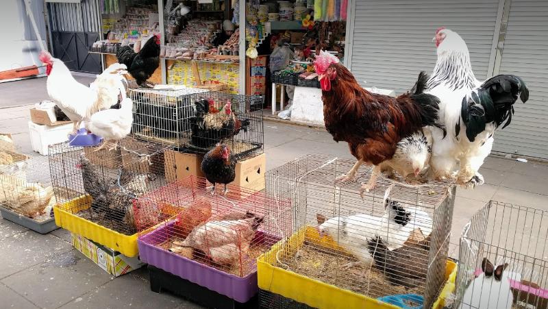 Полюстровский Рынок птицы