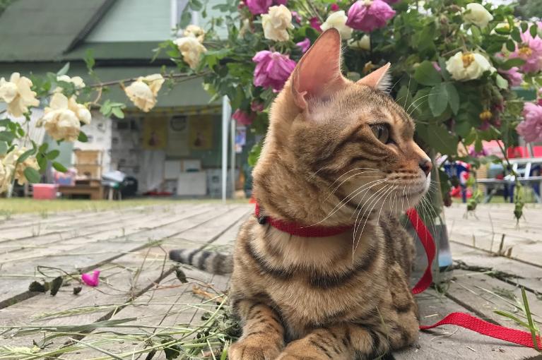 Музей кошки - живые экспонаты