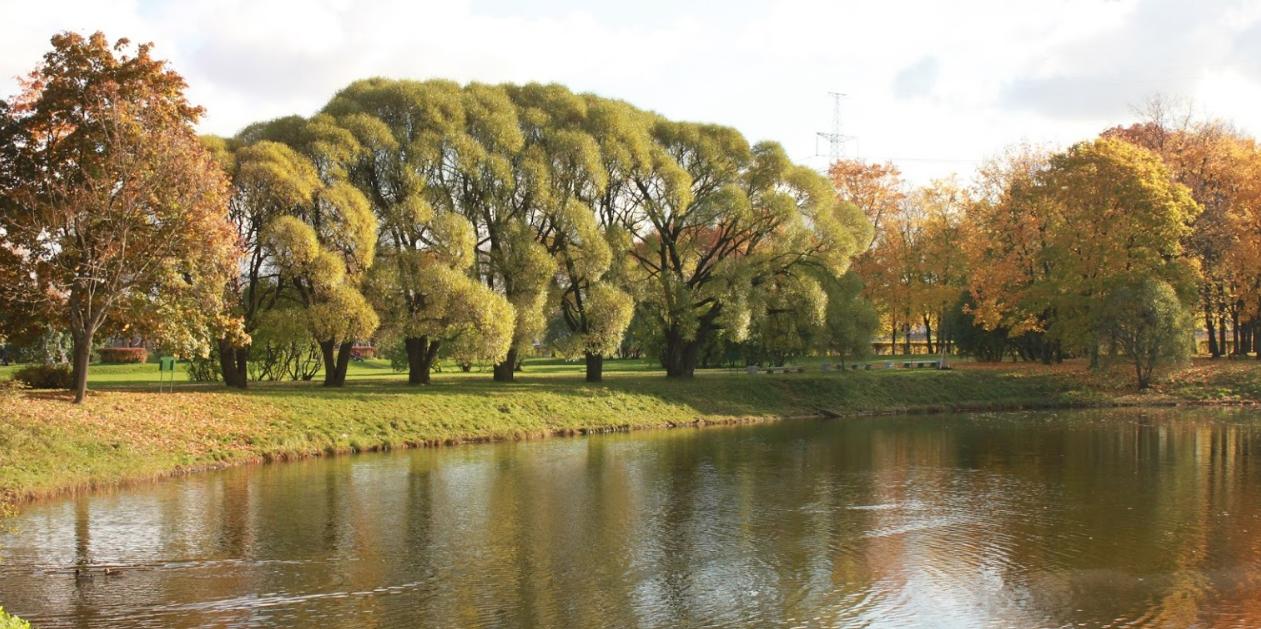 Картинки по запросу Южно-Приморский парк в Северной столице