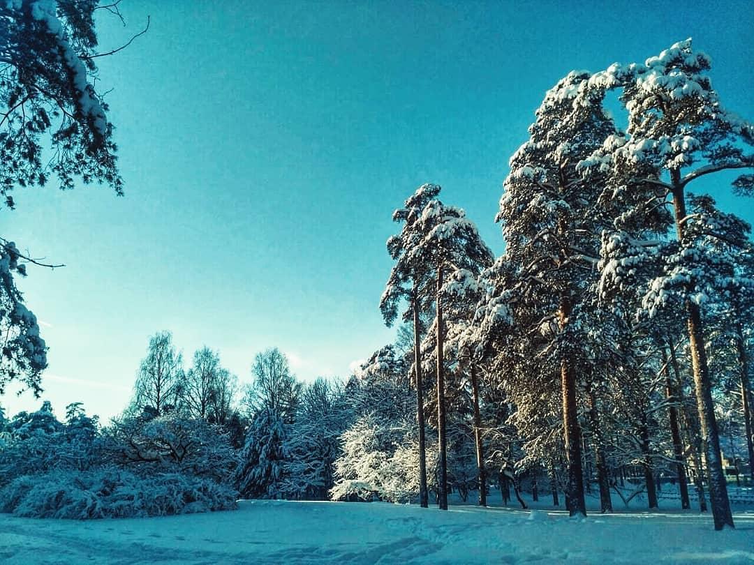 Парк Сосновка СПб