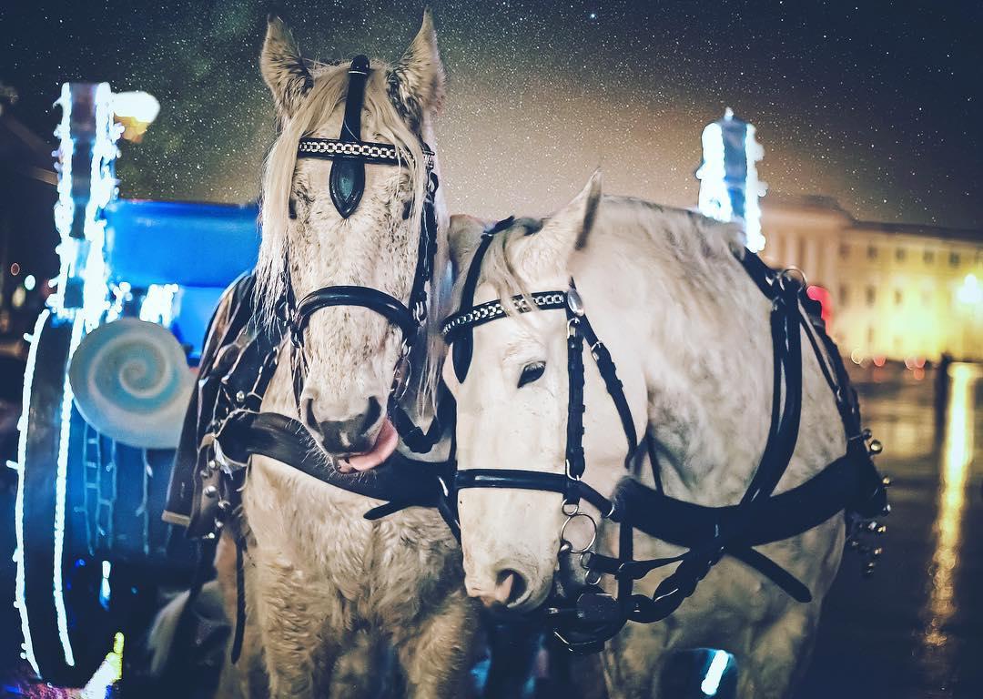 Кони на Дворцовой площади