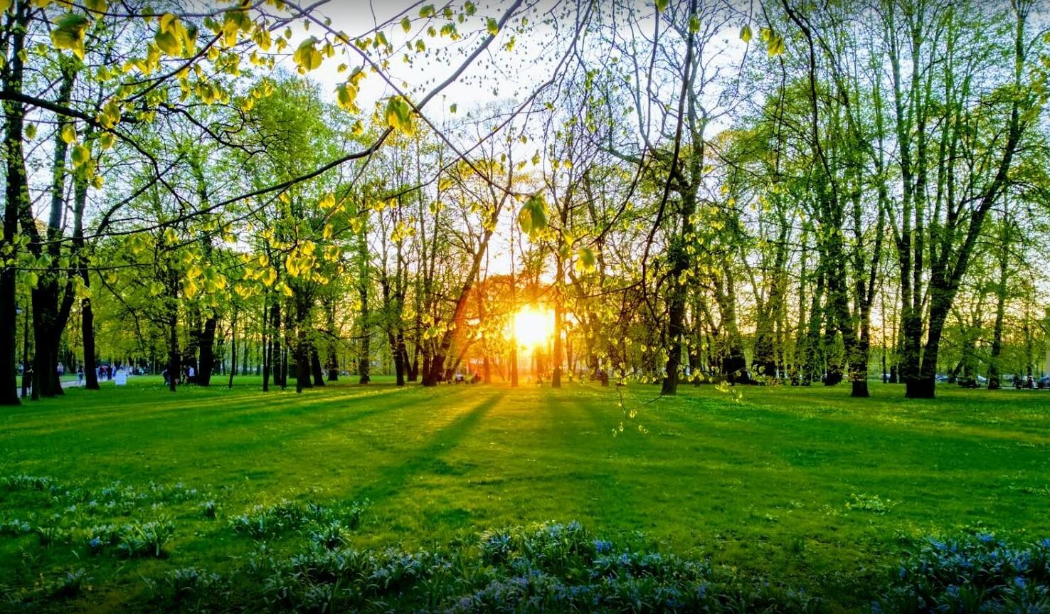 Михайловский сад фото
