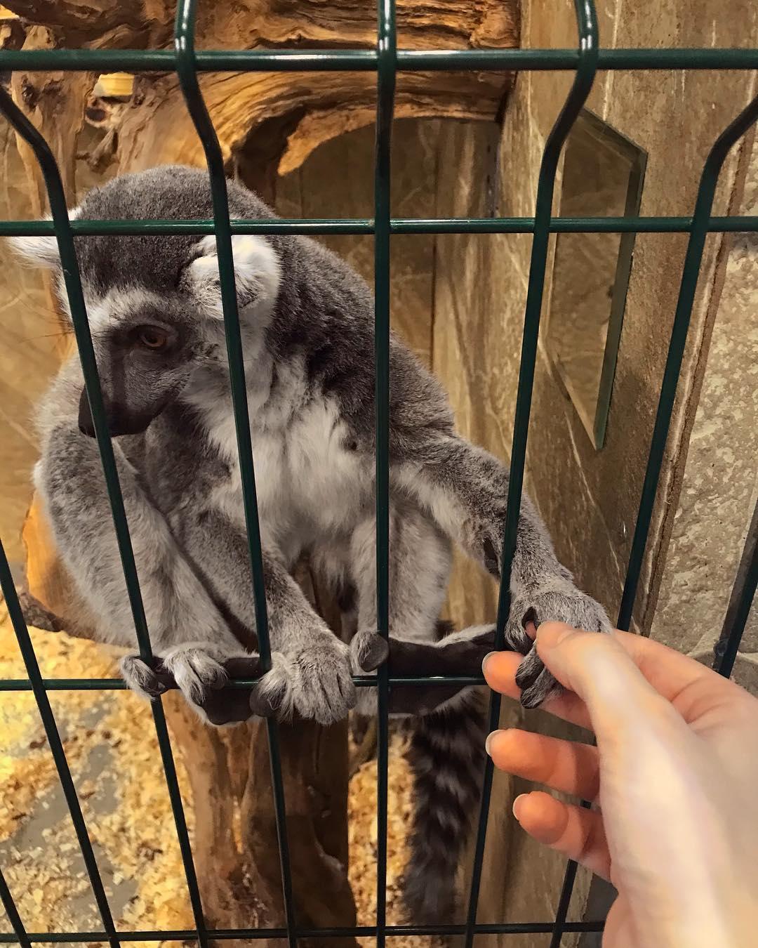 Трогательный зоопарк в Санкт-Петербурге